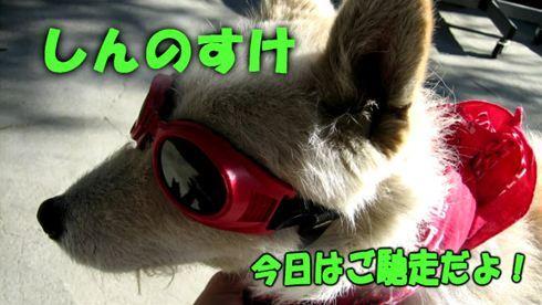 shinnosuke_01_R.jpg